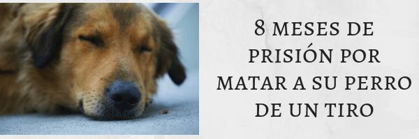 8 meses de prisión por matar a su perro